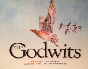 godwits